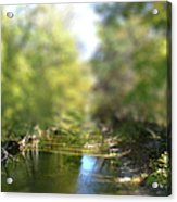 Stream Reflections Acrylic Print