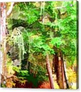 Streams In A Wood Covered With Leaves Acrylic Print