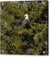 Streamside Eagle Acrylic Print