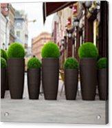 Street Flowers Near Cafe Acrylic Print