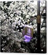 Streetlights In Blossoms Acrylic Print