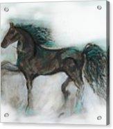 Striking Stallion Acrylic Print