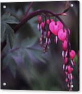 String Of Hearts 2 Acrylic Print