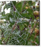 String Of Pearls Acrylic Print
