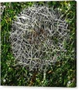 String Theory Dandelion Acrylic Print