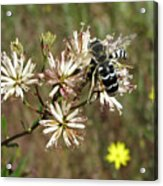 Striped Bee Acrylic Print