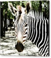 Stripes And Symmetry  Acrylic Print