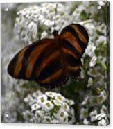 Stripes On Petals Acrylic Print