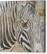 Stripes Acrylic Print