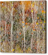 Stripped Bare To The Bark Acrylic Print