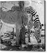 Stripped Pair Acrylic Print by Jeff Swanson
