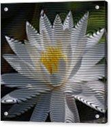 Stripped Waterlily Acrylic Print
