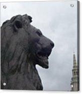 Strong Lion Acrylic Print