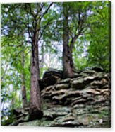 Strong Roots Acrylic Print