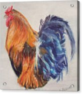 Strutting Rooster Acrylic Print