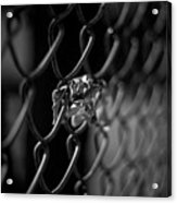 Stuck In A Fence Acrylic Print