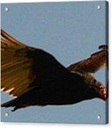 Studebaker Hawk Acrylic Print