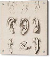 Studies Ears Anonimo, Blooteling Abraham Acrylic Print