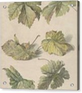Studies Of Vine Leaves, Willem Van Leen, 1796 Acrylic Print