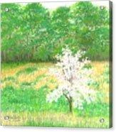 Studio Windows-7-5-08-dogwood Acrylic Print