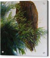 Study, Eagle Acrylic Print