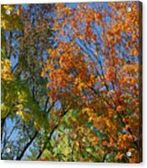 Study For Autumn 2 Acrylic Print
