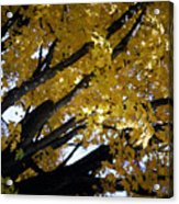 Study For Autumn 3 Acrylic Print
