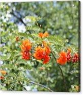 Study In Orange Acrylic Print