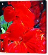 Study In Red Acrylic Print