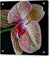 Study Of An Orchid 2 Acrylic Print