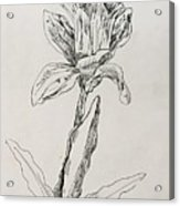 Study Of Flower Acrylic Print