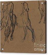 Study Of Horses Acrylic Print