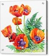 Study Of Poppies Acrylic Print