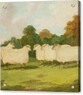 Study Of Sheep In A Landscape   Acrylic Print by Richard Whitford