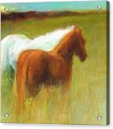 Study Of Two Ponies Acrylic Print
