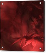 Study Of Uplit Leaves Acrylic Print