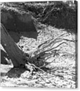 Stump In The Sand Acrylic Print