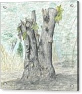 Stump Acrylic Print
