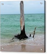 Stump Pass Tree In Color Acrylic Print