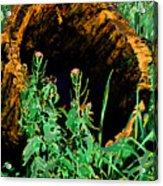 Stump Transformed Acrylic Print