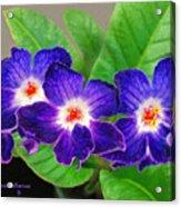Stunning Blue Flowers Acrylic Print