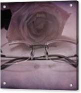 Stylish Specs Acrylic Print