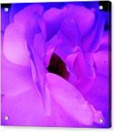 Subtle Blush Acrylic Print