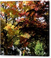 Suburban Autumn Acrylic Print
