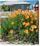 Suburban House On Orchard Avenue With Poppies Hayward California 3 Acrylic Print