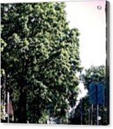 Suburban Tree Acrylic Print