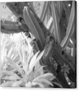Succulent Delight Acrylic Print