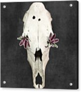Succulent Flowers And Horse Skull Acrylic Print