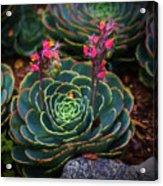 Succulent Flowers Acrylic Print
