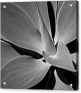 Succulent In Black And White Acrylic Print